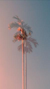椰树 天空 渐变 唯美