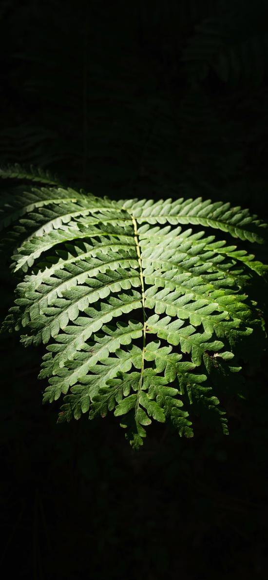 叶子 蕨类植物 潮湿 草本