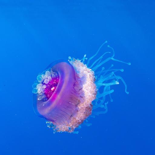 水母 浮游 海洋 触手