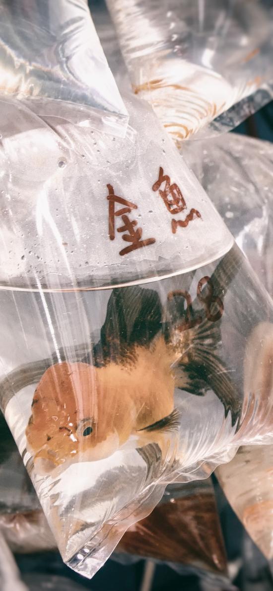 袋子 水 金鱼 观赏