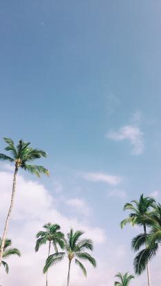 椰树 天空 蔚蓝 唯美