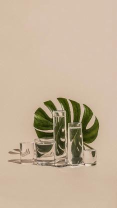 植物穵 水杯 倒映 反射