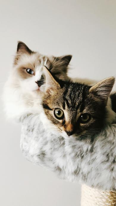 猫咪 宠物 皮毛 猫屋