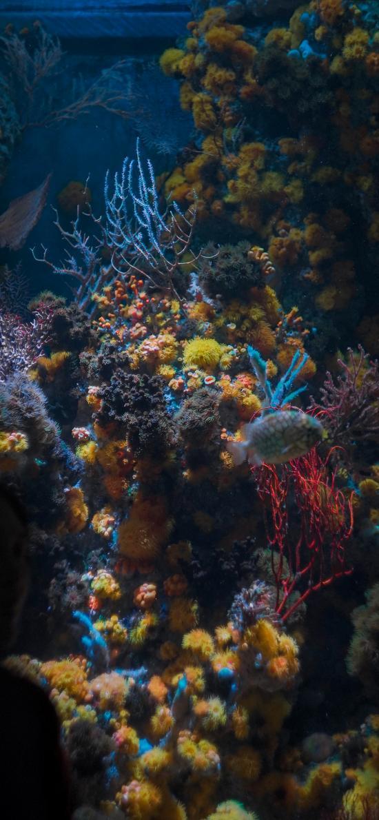 珊瑚虫 珊瑚 色彩 海底