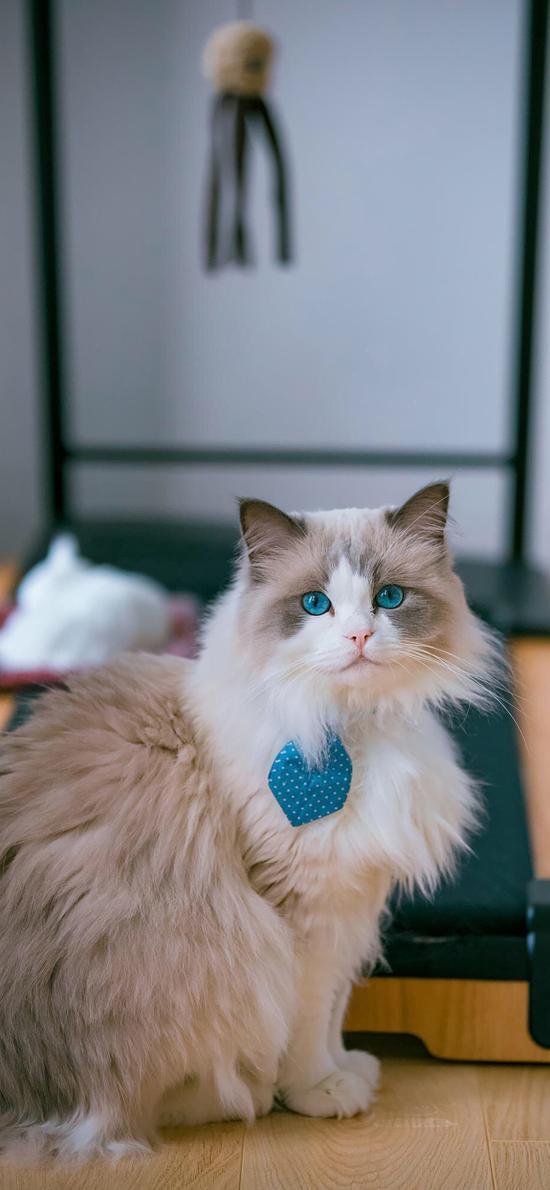 猫咪 宠物 瞳孔 皮毛 项圈