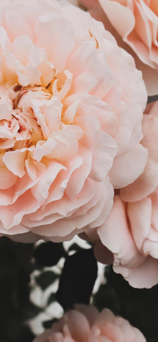 鲜花 盛开 花朵 花瓣
