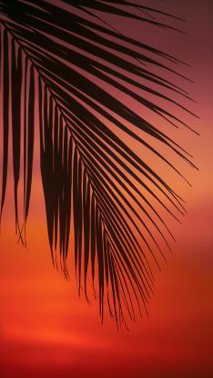 落日 唯美 红霞 棕榈叶