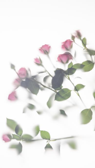 鲜花 朦胧 花束 意境