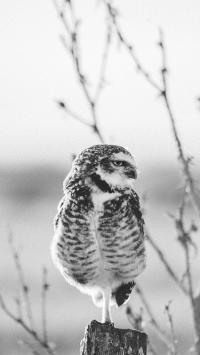 猫头鹰 夜视 站立 鸟类