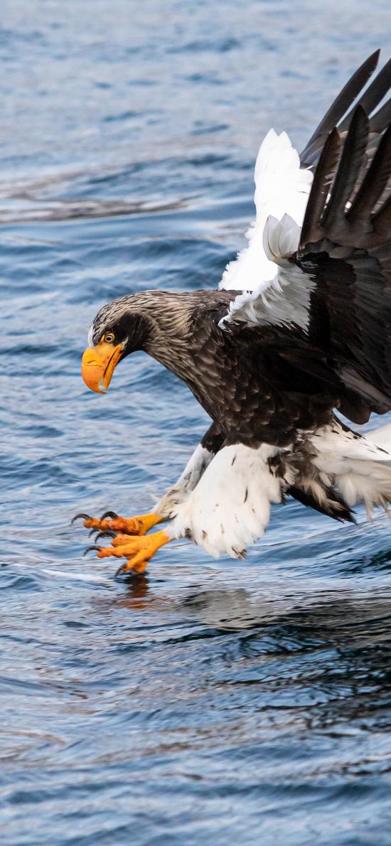 飞鸟 飞禽 海面 捕食