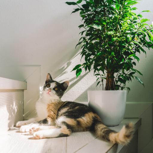 猫咪 宠物 台阶 盆栽 晒日