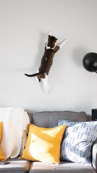 宠物 猫咪 沙发 跳跃 上墙