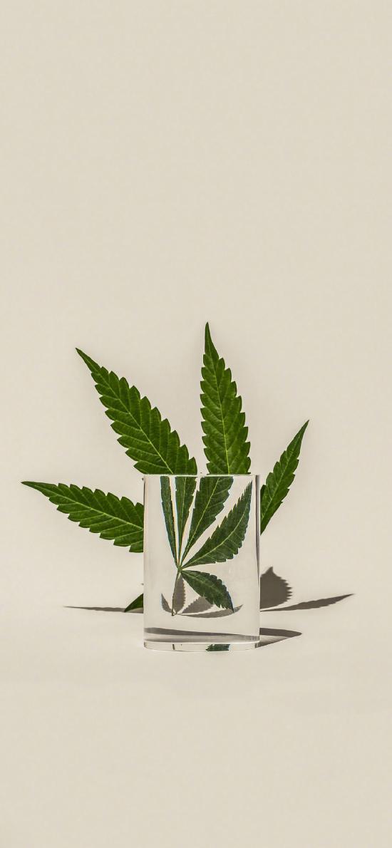 枝叶 水杯 玻璃杯 放大