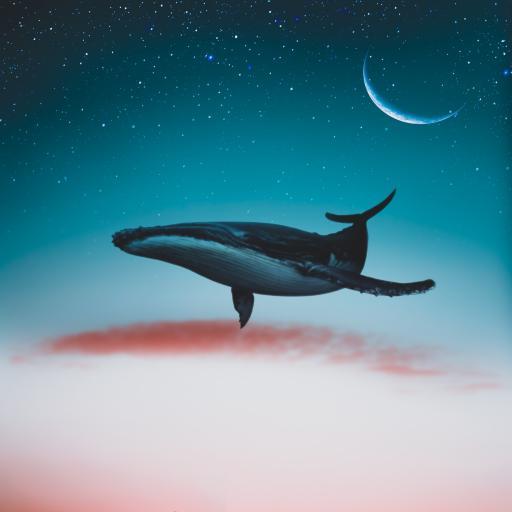 鲸鱼 星空 月亮 翱翔