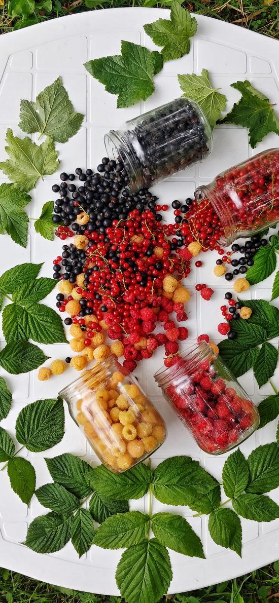 美国 水果 树莓 蓝莓