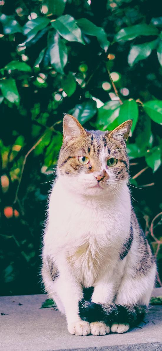 猫咪 宠物 花猫 户外