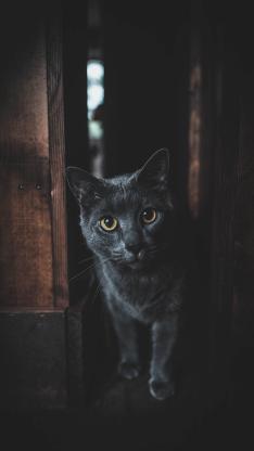 猫咪 宠物 短毛 饲养