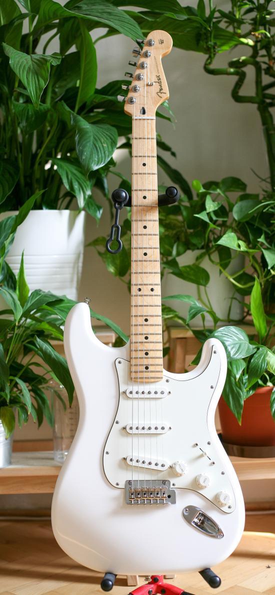 乐器 吉他 贝斯 绿植
