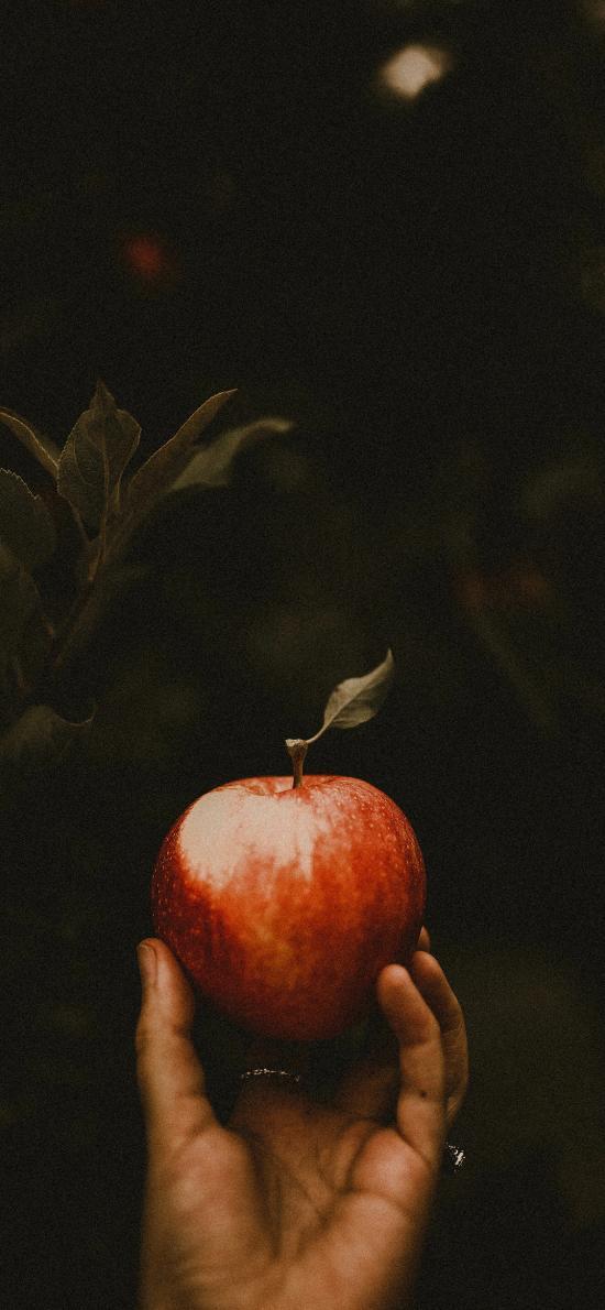 水果 苹果 鲜红 新鲜 手部