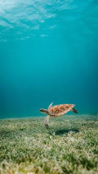 海龟 海洋 水草 清澈