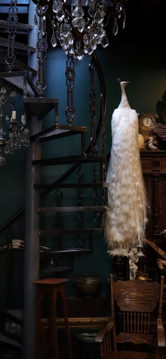 家居 吊灯 孔雀 标本 白色