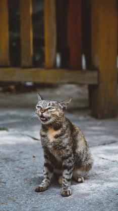 猫咪 花猫 喵星人