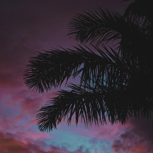 天空 彩霞 云朵 椰树