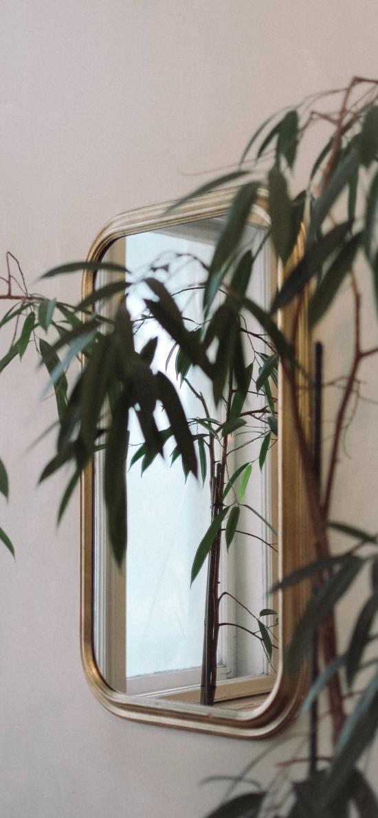 家居 绿植 观赏 绿化 镜子
