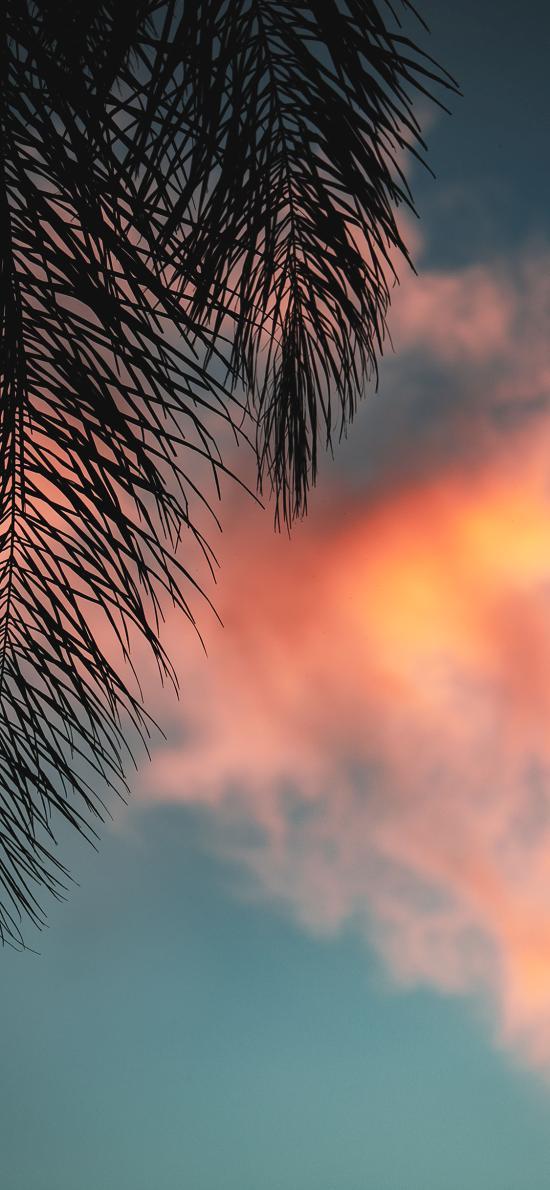 云空 红霞 树叶 唯美