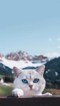 猫咪 宠物 可爱 饲养