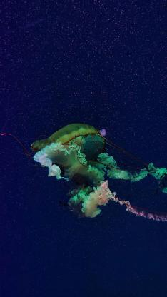 水母 浮游 色彩 触手