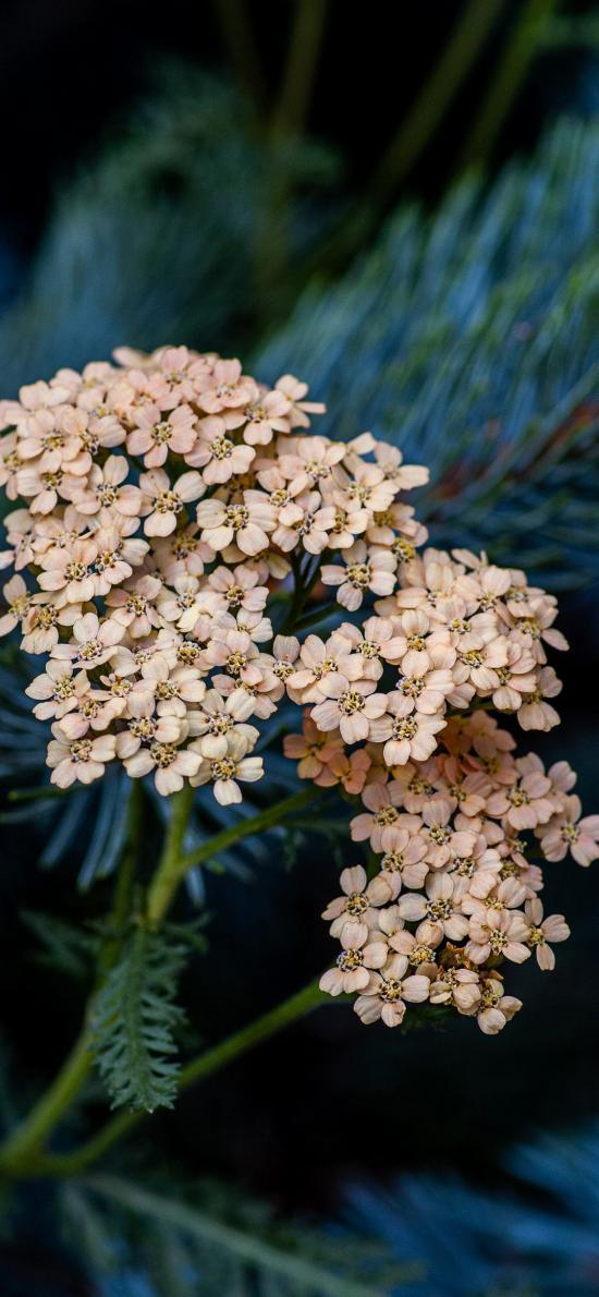 鲜花 盛开 花簇 花朵