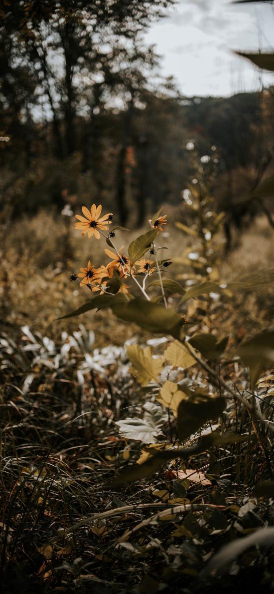 郊外 草丛 野花 黄色