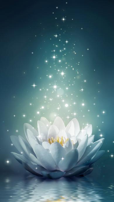 莲花 唯美 美图 花朵