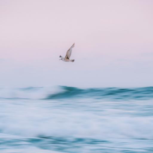 飞鸟 海平面 大海 自然
