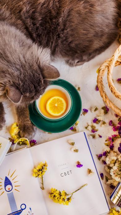 猫咪宠物 柠檬茶 书籍 碎花 花瓣