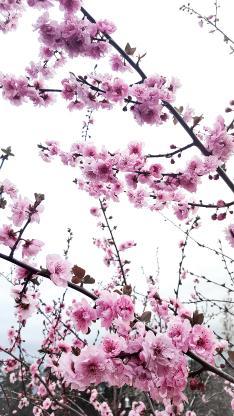 花季 鲜花 盛开 花朵