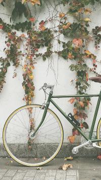 庭院 单车 自行车 绿植 藤蔓