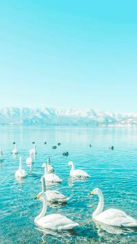 水面 天鹅 湖水 飞鸟