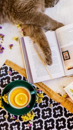 书籍 猫咪 宠物 柠檬茶