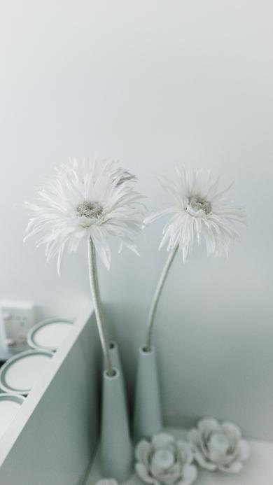 装饰 菊花 白 简约 花瓶