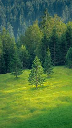 大自然 绿意 草坪 树木 森林