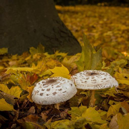 蘑菇 菌类 真菌 落叶 枯黄
