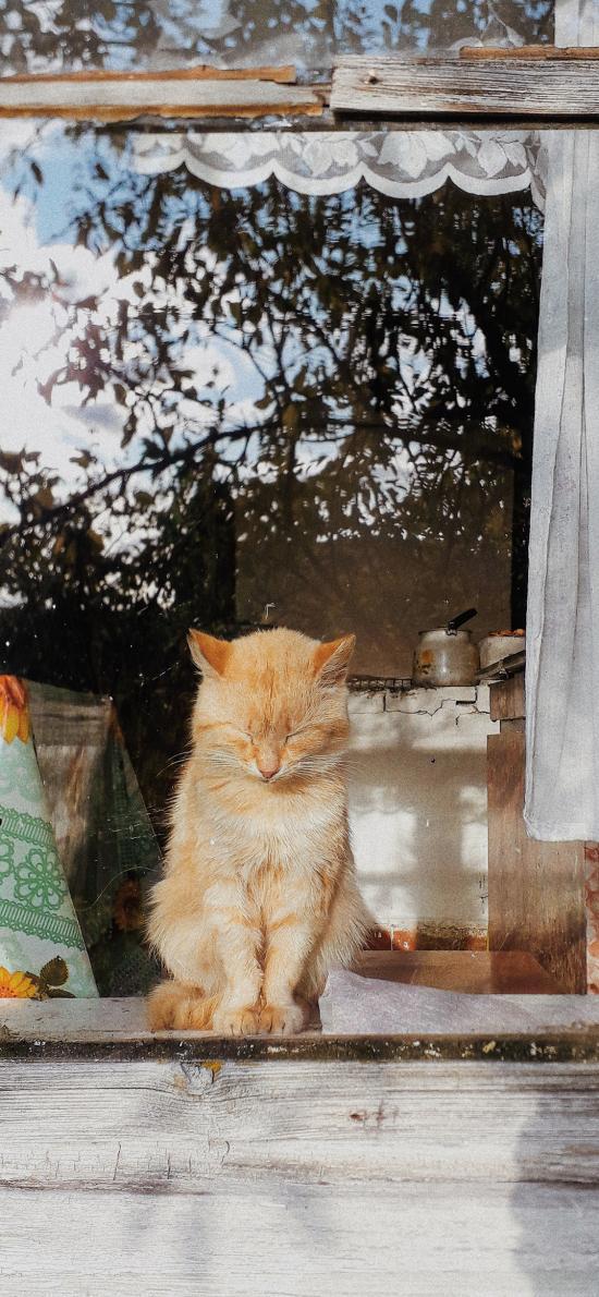 窗户 橘猫 猫咪 可爱 宠物