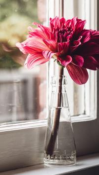 鲜花 花朵 花瓶 窗台