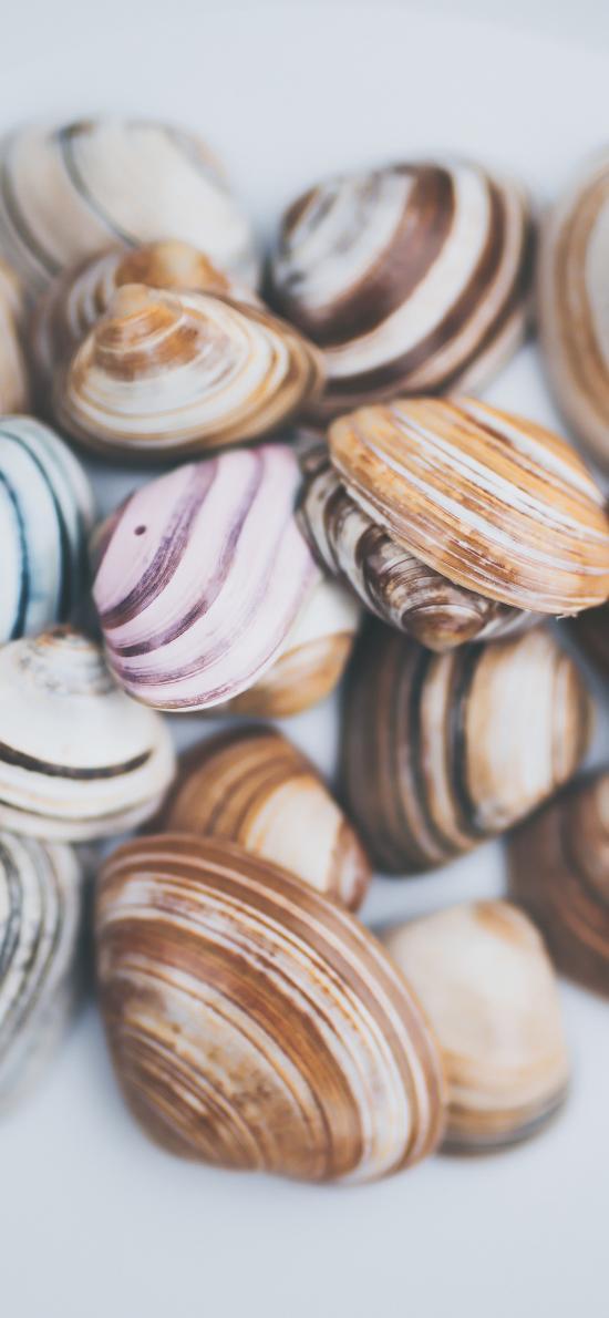 海鲜 食材 贝壳 颜色