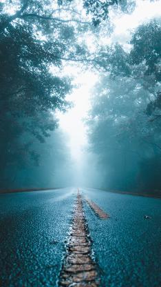 道路 树木 迷雾 树林