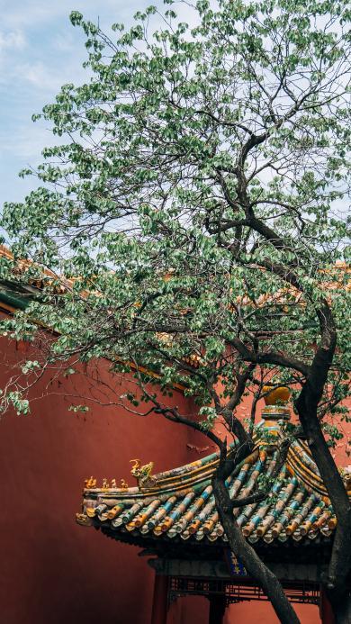 树木 宫墙 庭院 天空