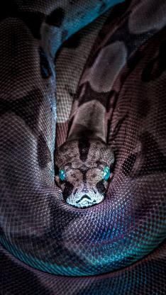爬行 蛇 冷血 瞳孔 鳞片