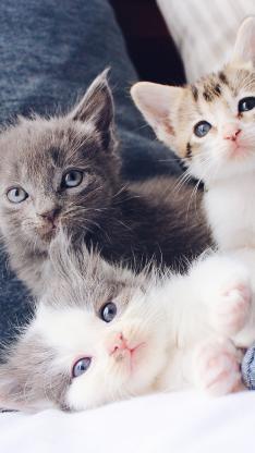 猫咪 宠物 可爱 幼仔